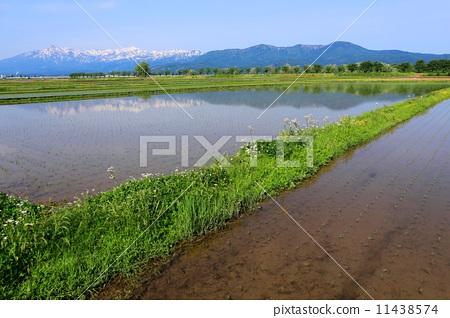 图库照片: 乡村风光 农村场景 水稻