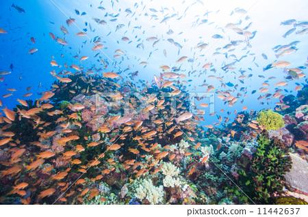 图库照片: 鱼群 海底的 海里