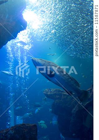 鱼/海鲜 热带鱼 照片 热带鱼 鱼 时髦 首页 照片 鱼/海鲜 热带鱼