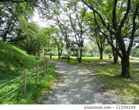 公园 散步 人行道