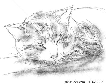 胆小的 钢笔画 猫