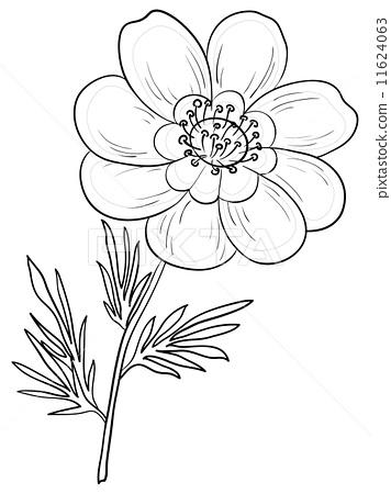 插图素材: flower adonis, contours