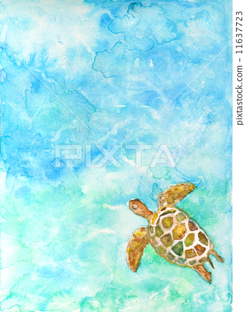 乌龟 乌龟 插图 生态旅游  *pixta限定素材仅在pixta网站,或pixta合作