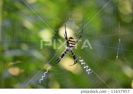 蜘蛛 节肢动物 露天
