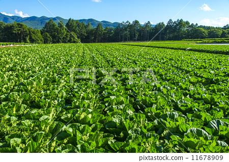 高地菜地 首页 照片 风景_自然 大地 原野 高地菜地  *pixta限定素材