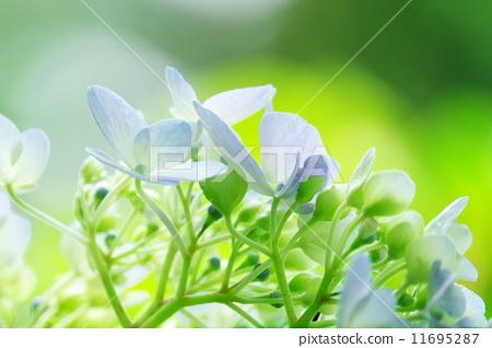 ppt 背景 壁纸 电脑桌面 发芽 花 绿色 绿色植物 嫩芽 嫩叶 新芽 植物
