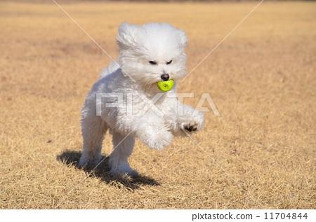 狗 跑步 奔跑