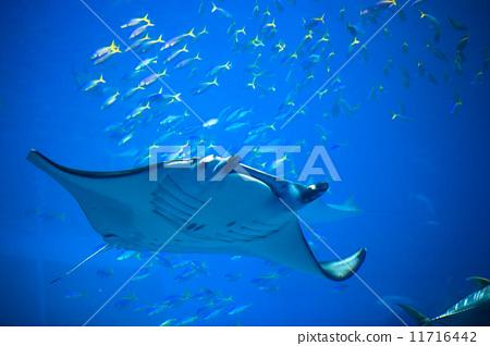 壁纸 海底 海底世界 海洋馆 水族馆 桌面 450_318