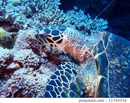 壁纸 海底 海底世界 海洋馆 水族馆 450_356