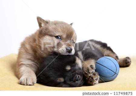 照片: 小狗 两个动物 睡觉