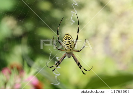 蜘蛛网 织网蜘蛛 蜘蛛