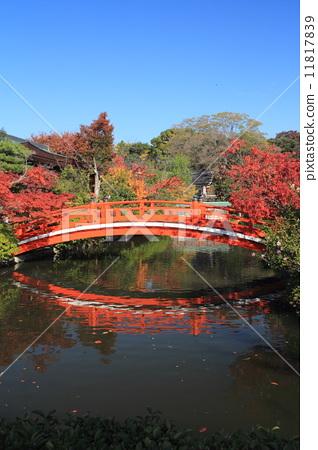 图库照片: 拱桥 秋天 秋