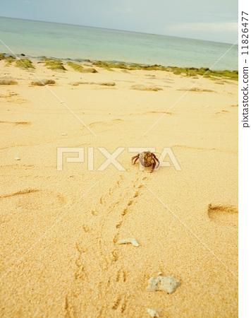 出租房屋 沙滩 寄居蟹