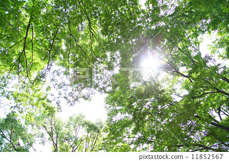 照片素材(图片): 透过树叶的阳光 树木 树