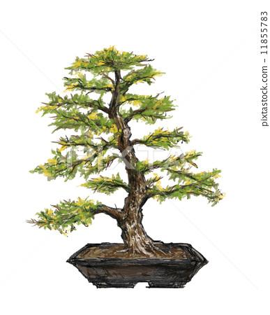 松树 盆栽 植物的生命