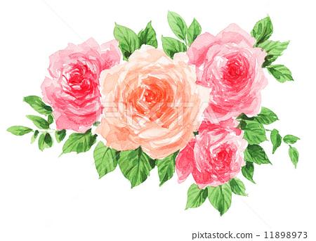 图库插图: 玫瑰 玫瑰花 花朵