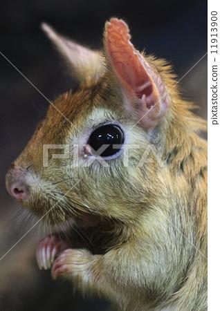 照片 小动物 大瞳孔 漂亮  pixta限定素材      小动物 大瞳孔 漂亮