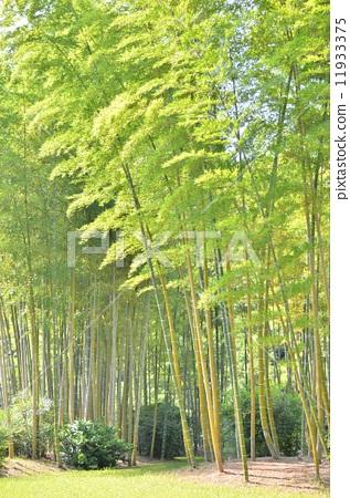竹子唯美背景 风景