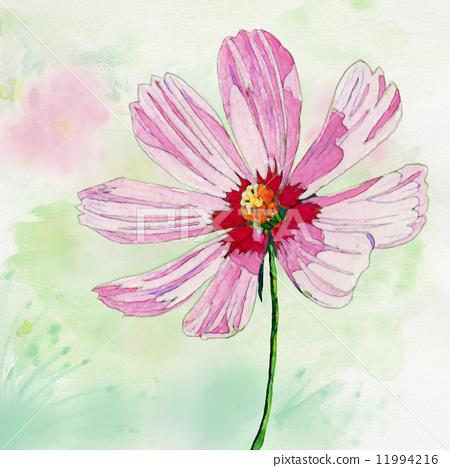 首页 插图 植物/花 大波斯菊 大波斯菊 水彩 水彩画  *pixta限定素材