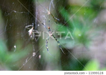 蜘蛛网 蜘蛛 节肢动物