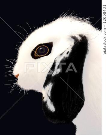 兔子 野兔 颅骨 12008431