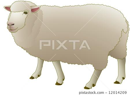 图库插图: 矢量 动物 绵羊