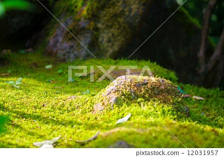 苔藓 青苔 自然