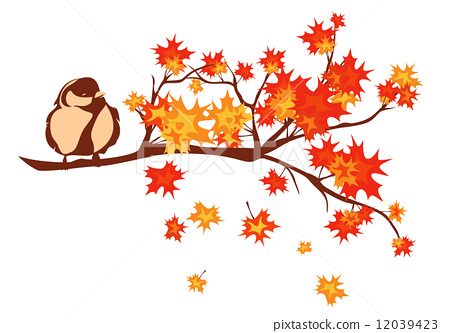 图库插图: bird sitting on branch among autumn season maple tree