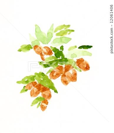 水彩画 橡果 植物
