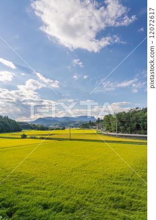 图库照片: 乡村风光 农村场景 稻田