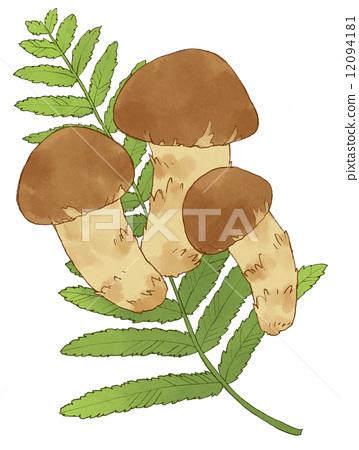 树叶 里白木山茶 松茸蘑菇