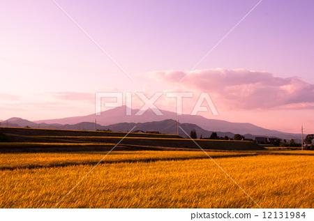 收获风景文字图片