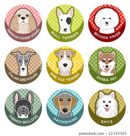 动物 美国可卡犬 动物宝宝