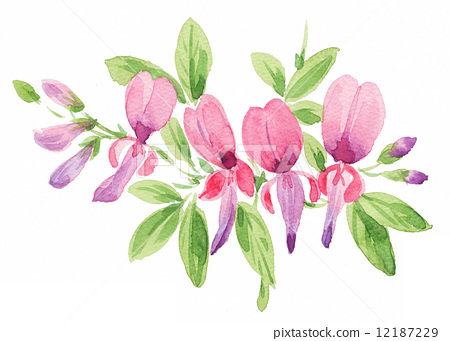 插图素材: 胡枝子 花朵 花