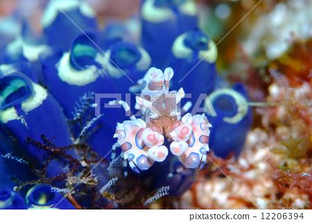 壁纸 海底 海底世界 海洋馆 水族馆 450_320