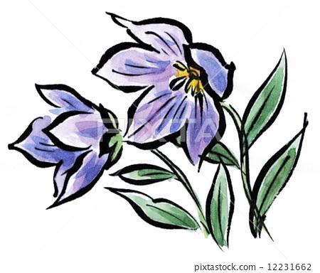 中国风铃草 开花