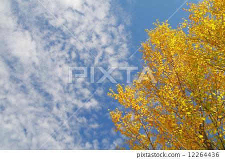 秋叶 假发 秋天的天空