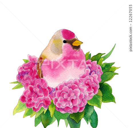 水彩画 小鸟 可爱