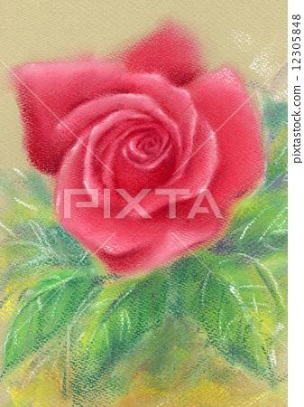 插图素材: 粉彩画玫瑰