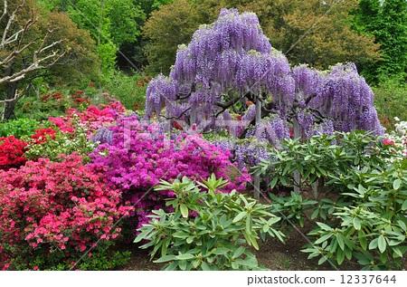照片素材(图片): 春天的景色