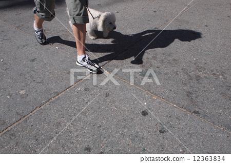 动物的影子简笔画