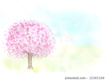 樱桃树 水彩画 樱花