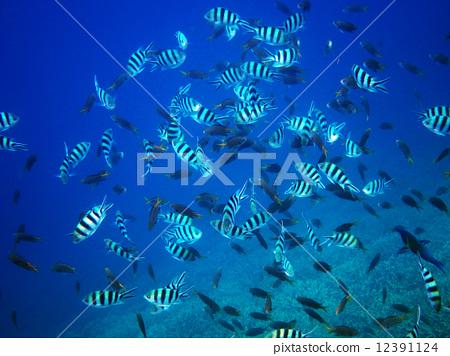 图库照片: 鱼 蓝色的海洋 热带鱼图片