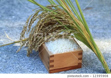 水稻与米稻穗简笔画-水稻与米