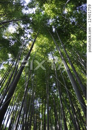 竹 风景园林 手绘