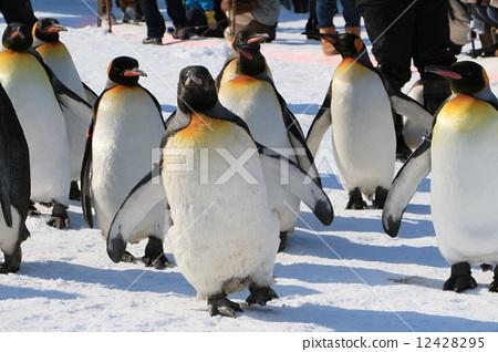 企鹅 旭山动物园 北海道