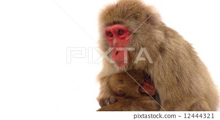 动物 猴子 陆生动物