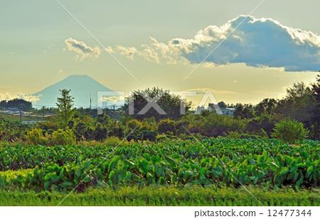 秋天的天空 富士山 见沼米田