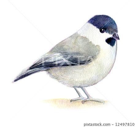 图库插图: 褐头山雀 水彩画 白底