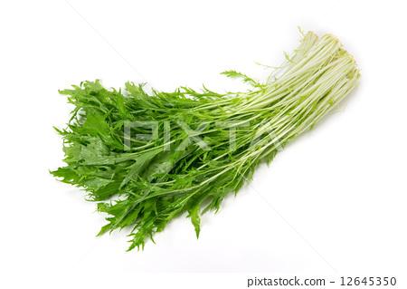 图库照片: 叶菜类 绿叶菜 楔铁图片